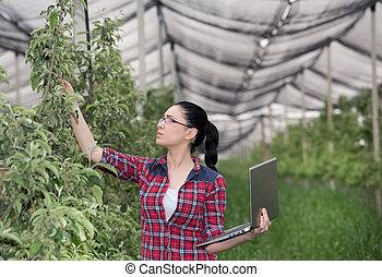 женщина, в, яблоко, фруктовый сад