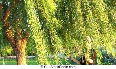 женщина, дерево, под
