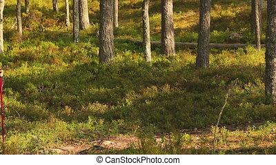 женщина, forest., молодой, турист