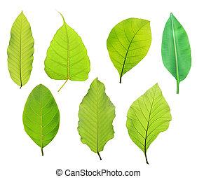 задавать, of, зеленый, лист, isolated, на, белый, задний план
