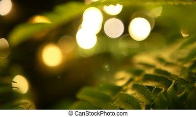 задний план, макрос, сочный, молодой, тропический, зеленый, листва, весна, свежий, папоротник