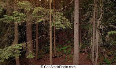 закат солнца, лесистая местность, descending, выстрел