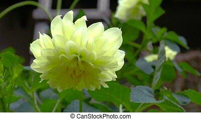 закрыть, цветок, вверх, желтый