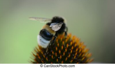 закрыть, цветок, вверх, пчела