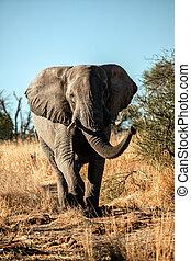 зарядка, слон