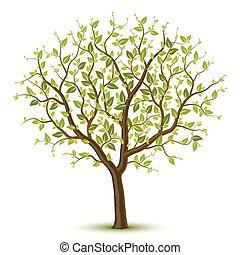 зеленый, дерево, листва