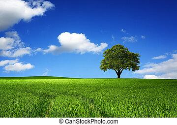 зеленый, дерево, пейзаж, природа