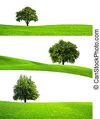 зеленый, дерево, природа