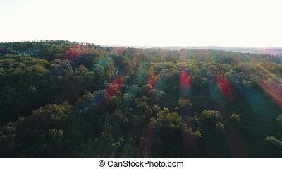 зеленый, лес, солнце, rays