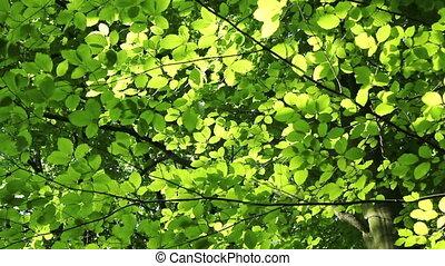 зеленый, лес