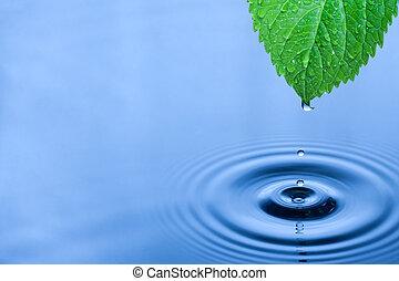 зеленый, лист, воды, drops