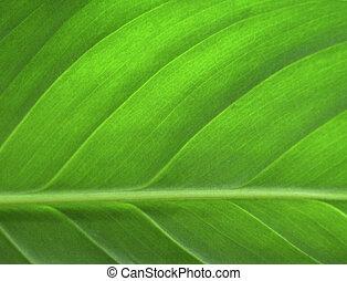 зеленый, лист, крупным планом