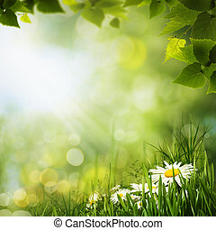 зеленый, луг, with, маргаритка, flowes, натуральный,...