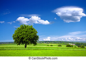 зеленый, окружающая среда