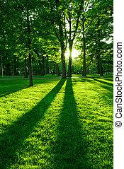 зеленый, парк