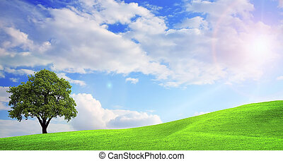 зеленый, природа, пейзаж
