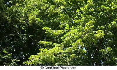 зеленый, растительность