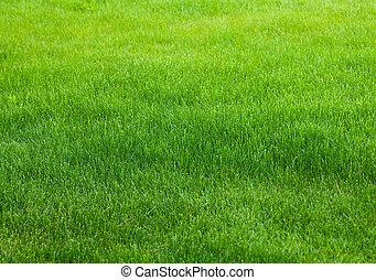зеленый, трава, задний план
