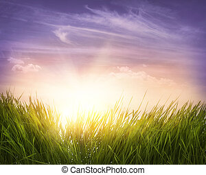 зеленый, трава