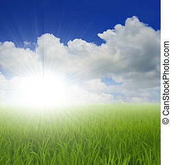 зеленый, трава, небо