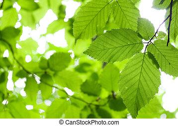 зеленый, leaves