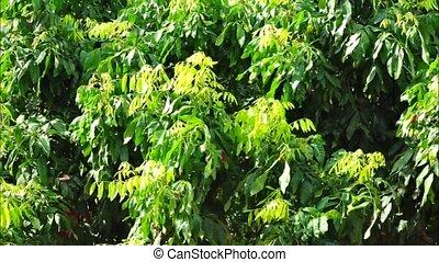 зеленый, leaves.