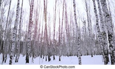 зима, день, береза, лесок