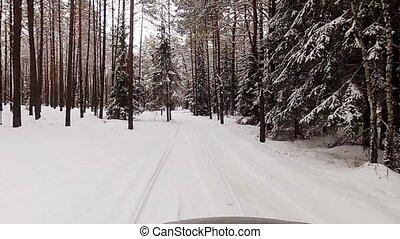 зима, дорога, лес
