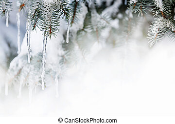 зима, задний план, with, icicles, на, ель, дерево
