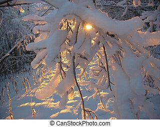 зима, закат солнца