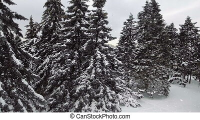 зима, замороженные, снег, forest., falling, aerial:
