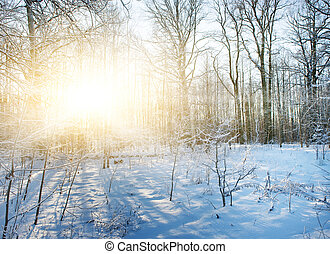 зима, лес, сценический