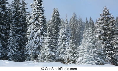 зима, пейзаж, лес