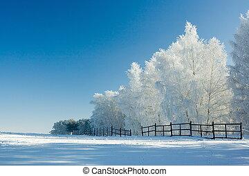 зима, пейзаж, and, trees