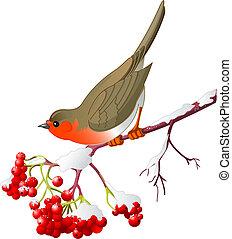 зима, птица