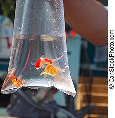 золотая рыбка, приз, в, мешок
