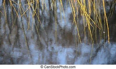 ива, ветви, leaves, без, вешать, качаться, wind., воды, над