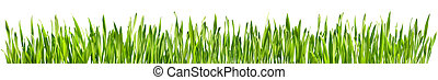 идеально, весна, -, isolated, трава, граница