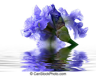 ирис, отражение