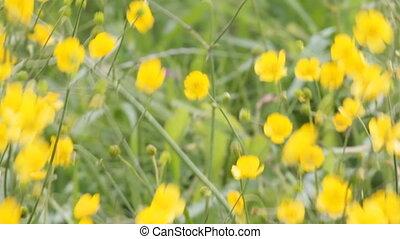 капризный, сильный, eared, трава, ветер, забота