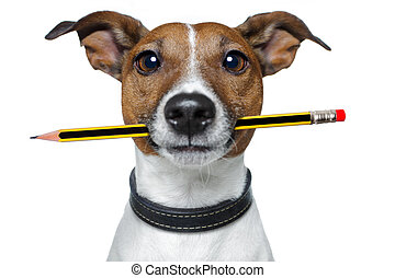 карандаш, собака, ластик