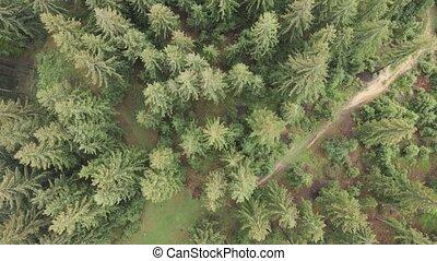карпатская, aerial., ель, ukraine., motion., медленный, forest., mountains.