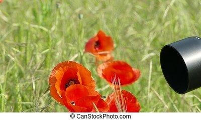 картина, цветок, takes, фотограф