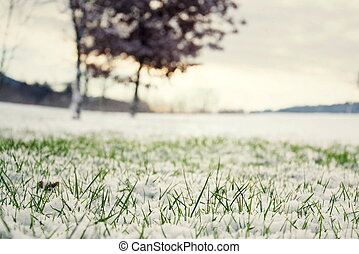 концепция, весна, снег, куст, задний план, зеленый, трава, здравствуйте