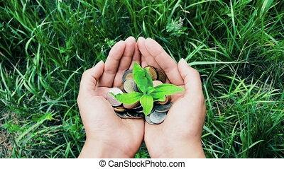 концепция, финансы, деньги, coins, рука, рост, свая, женский пол, держа, выращивание, растение