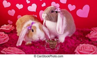 концепция, 's, кролик, домашнее животное, valentines, валентин, животное, день