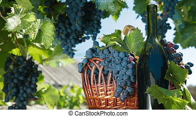 корзина, бутылка, виноград, вино