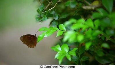 , коричневый, бабочка, сидящий, на, , лист, of, , растение, and, flies