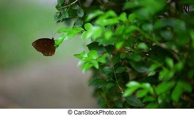 , коричневый, бабочка, сидящий, на, , лист, of, , plant.