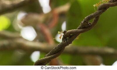 коричневый, вокруг, дерево, змея, завернутый, прут